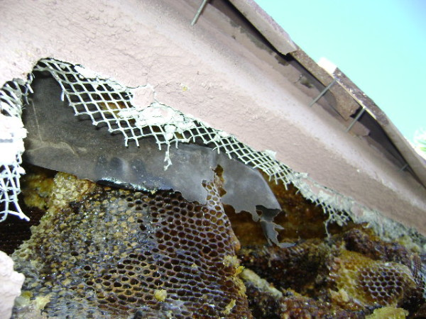 beehive soffit
