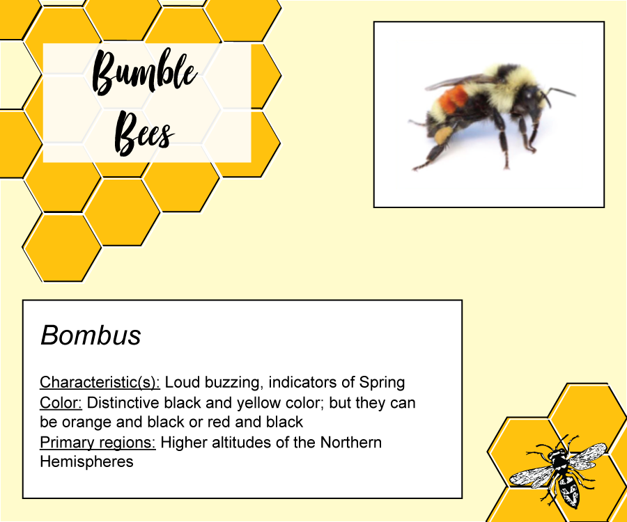 Types of Bees: The Buzzing Guide - Bee Master of Las Vegas