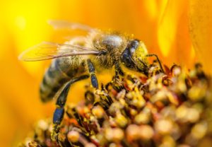 Bee with pollen all over it