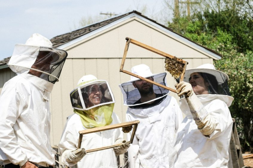 Beekeepers looking at their hives